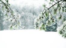 用冰报道的杉木分支 免版税库存照片