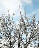 用冰报道的树枝 免版税图库摄影