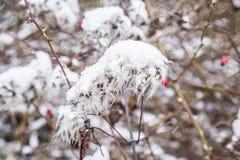 用冰报道的植物细节 库存照片