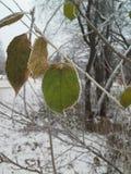用冰晶盖的树的一片绿色叶子 冻结 霜 免版税库存照片