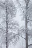 用冰盖的两棵冬天树 免版税库存照片