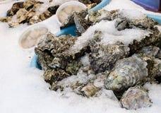 用冰盖的新鲜的牡蛎 免版税库存照片