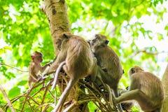 用力嚼在树的一个小组猴子 免版税库存照片