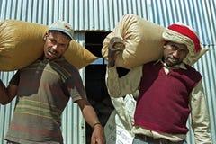 用力拖大袋五谷的埃赛俄比亚的农夫 免版税库存照片
