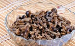 用卤汁泡的蘑菇-蜜环菌 免版税库存图片