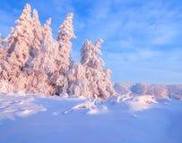 用厚实的雪层数盖的好的扭转的树在美好的冬日启迪玫瑰色的日落 库存图片