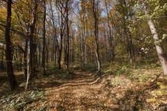 用叶子报道的森林道路的图片 免版税库存图片