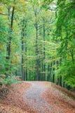 用叶子盖的小径在秋天森林里 库存照片