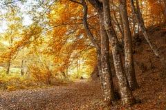 用叶子盖的森林公路在秋天 免版税库存图片