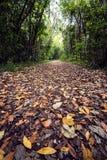 用叶子盖的足迹 免版税库存照片