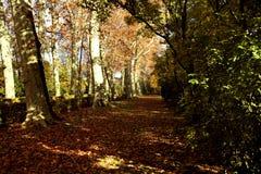 用叶子盖的路 免版税库存图片