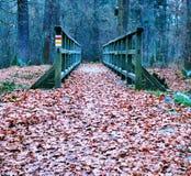 用叶子盖的道路 库存照片