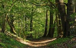 用叶子道路盖入森林 库存照片