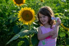 用向日葵享受自然和笑在夏天向日葵领域的秀丽快乐的女孩 Sunflare,光束,焕发 库存照片