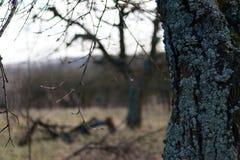 用吠声盖的树干在被弄脏的背景的庭院里 库存照片