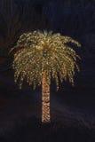 用圣诞灯装饰的孤零零棕榈树 库存照片