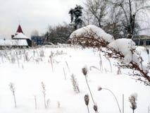 用在一个多雪的草甸的雪盖的野生植物 库存图片