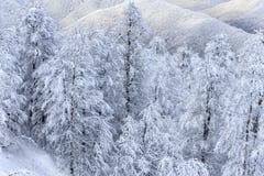 用在冬天山森林美好的垂直的风景的雪盖的树 免版税图库摄影