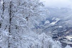用在冬天山森林美好的垂直的风景的雪盖的树 库存图片