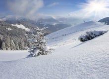 用在冬天山的雪盖的一棵小圣诞树 库存照片
