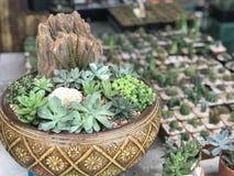 用在庭院盘子的岩石装饰的微型仙人掌庭院 库存图片