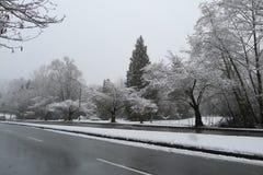 用在路的雪盖的樱桃树 免版税图库摄影