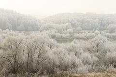 用在雾的树冰盖的树 免版税库存照片