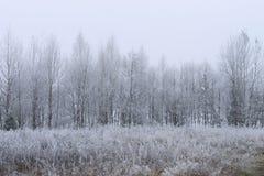 用在雾的树冰盖的树 免版税图库摄影