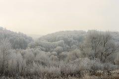 用在雾的树冰盖的树 库存照片