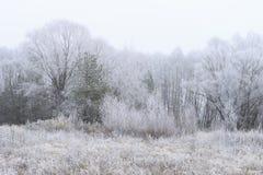 用在雾的树冰盖的树 免版税库存图片