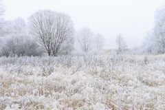 用在雾的树冰盖的树 图库摄影
