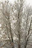 用在雾的树冰盖的树 库存图片