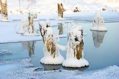用在冻池塘的雪盖的干燥树桩 免版税库存照片
