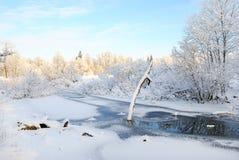用在冻池塘的雪盖的干燥树 库存图片