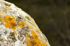 用地衣纹理盖的自然石头 免版税库存照片