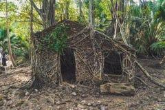 用大树报道的被放弃的殖民地建筑学在罗斯岛根源 免版税库存照片