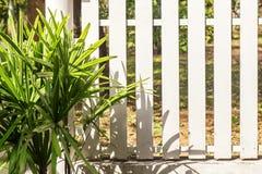 用小棕榈树装饰的白色篱芭 免版税库存照片