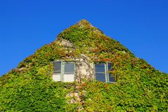 用常春藤盖的房子的门面 库存照片