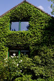 用常春藤盖的房子的门面 免版税库存图片