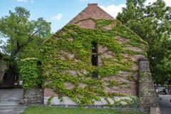 用常春藤盖的议院墙壁 图库摄影