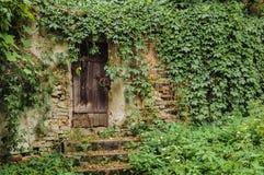 用常春藤盖的门 库存图片