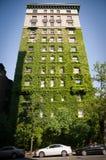 用常春藤盖的高NYC大厦 免版税库存图片