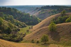 用干燥黄色草盖的小山风景在晴朗的秋天下午 免版税库存图片
