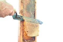 用手开盖蜂蜜梳子在纯净的白色 库存照片