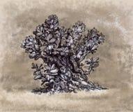 用手画景天树的植物  免版税库存图片