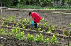 彭州,中国: 妇女施肥葡萄树 免版税库存照片