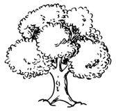 用手速写的落叶树. brander, 向量.图片