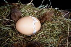 用拉锁拉上蛋壳 库存照片