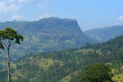 用斯里兰卡的自然风景的森林盖的山 免版税库存照片