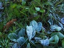 用早晨树冰或霜盖的一棵冻植物的抽象迷离背景 库存照片